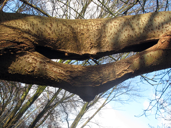 Een lachende boom en hoe zich simpel van zijn blik te ontdoen er was eens - Hoe een boom te verlichten ...