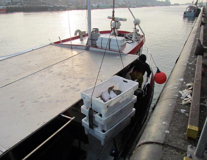 Vissen op Tong met Staand Want (5/6)