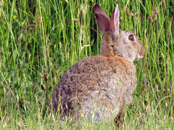 Afijn, we zagen een Konijn, maar 't bleek een Haas te zijn | Er was ...: selmasalo.wordpress.com/2012/06/17/afijn-we-zagen-een-konijn-maar-t...